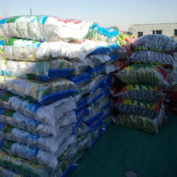 福建毛豆种子-4品种