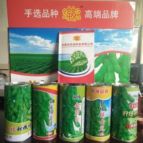 浙江毛豆种子-1品种
